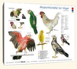 Akupunkturtafel für Vögel/Carola Krokowski