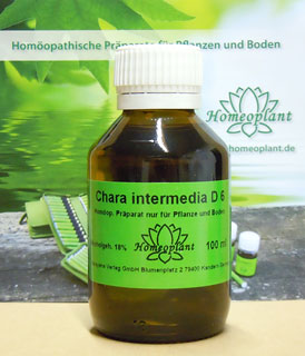 Chara intermedia (Armleuchteralge), Homeoplant