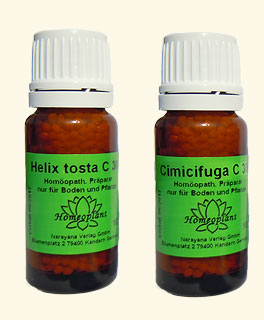 Helix tosta & Cimicifuga, Homeoplant