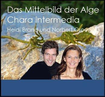 Das Heilpotenzial von Chara intermedia - 1 DVD/Heidi Brand / Norbert Groeger
