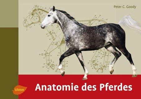 Anatomie des Pferdes/Peter C Goody