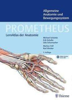 PROMETHEUS Allgemeine Anatomie und Bewegungssystem/Michael Schünke / Erik Schulte / Udo Schumacher / Markus Voll / Karl Wesker