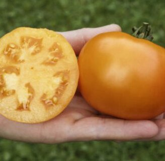 Saatgut Box Tomaten Bio