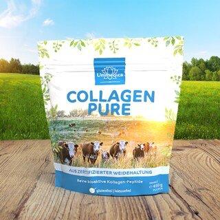 Collagen Pure - Kollagenprotein - aus zertifizierter Weidehaltung - 450 g Pulver - von Unimedica
