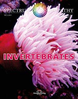 Spectrum of Homeopathy 2021-3, Invertebrates, Narayana Verlag